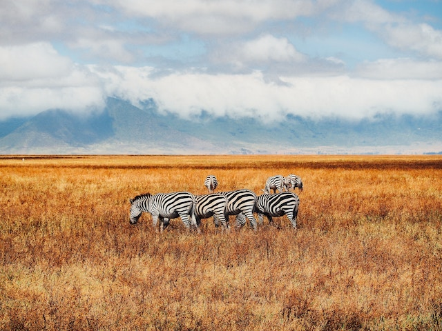 Get What You Pay For: My African Safari Experience