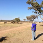 My South African Safari: Out of the Cubicle and into the Wild