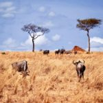 4 Harmful Misconceptions about Africa