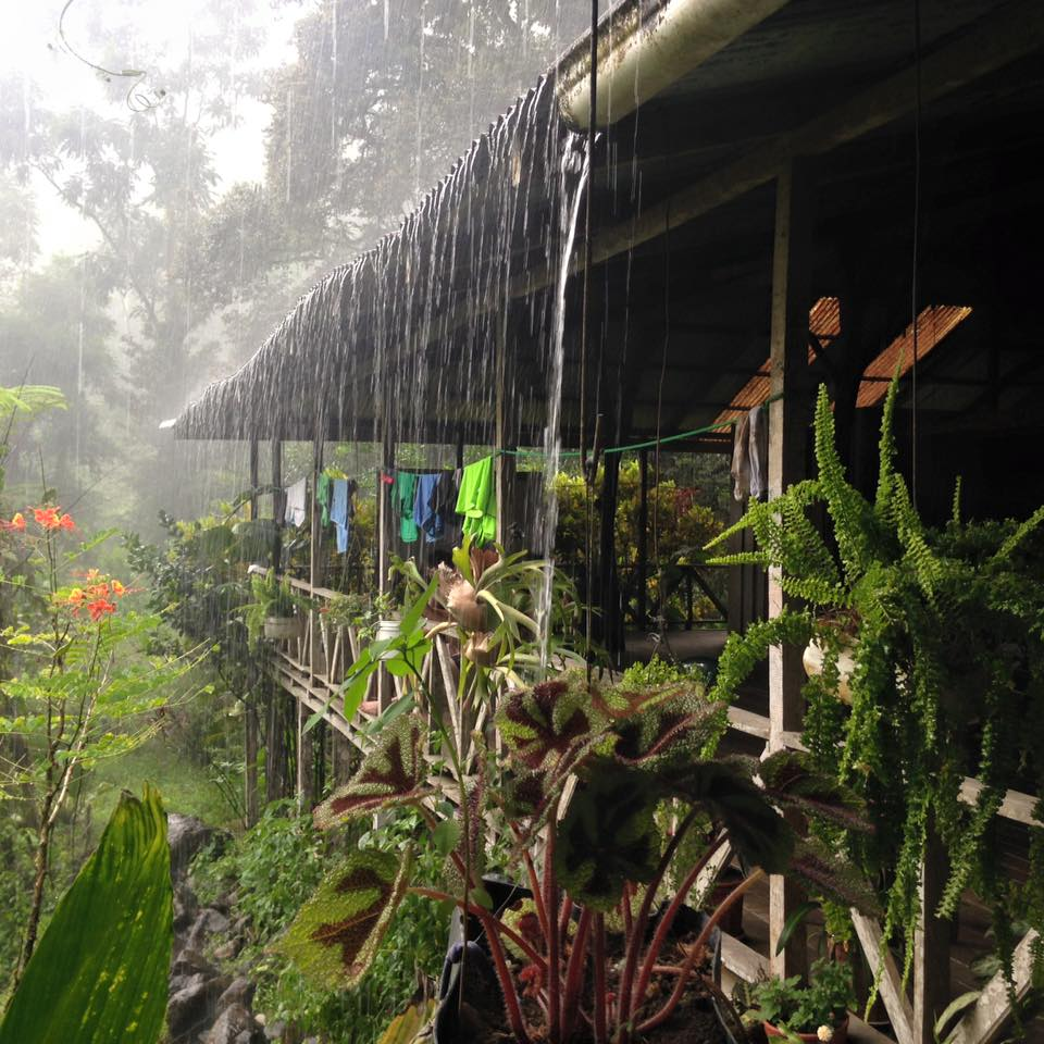Domestic Goddess and Cattle Herder: My Homestay in Costa Rica